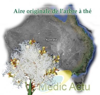 Tout sur l 39 huile essentielle d 39 arbre th melaleuca - L huile essentielle d arbre a the ...
