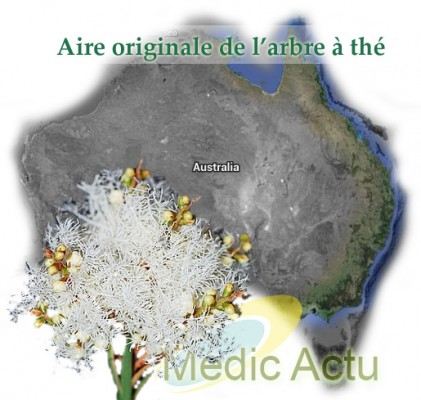 Carte de l'Australie avec branche de Melaleuca Alternifolia