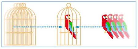 Une cage et un perroquet, l'œil doit fusionner