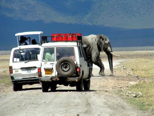 Un éléphant traverse devant deux LandRover dans le cratère du N'gonrongoro