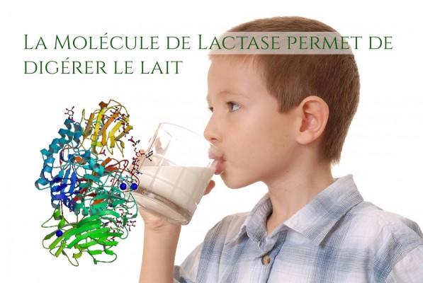 Lactase en surimpression sur une photo d'enfant buvant un verre de lait.
